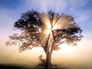 america-oak-tree-in-new-england-sunrise-1